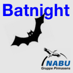 Artikelbild - NABU Batnight