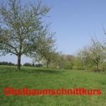 Artikelbild - OGV Obstbaumschnittkurs